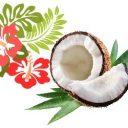 Bloc ingredient is Coconut oil